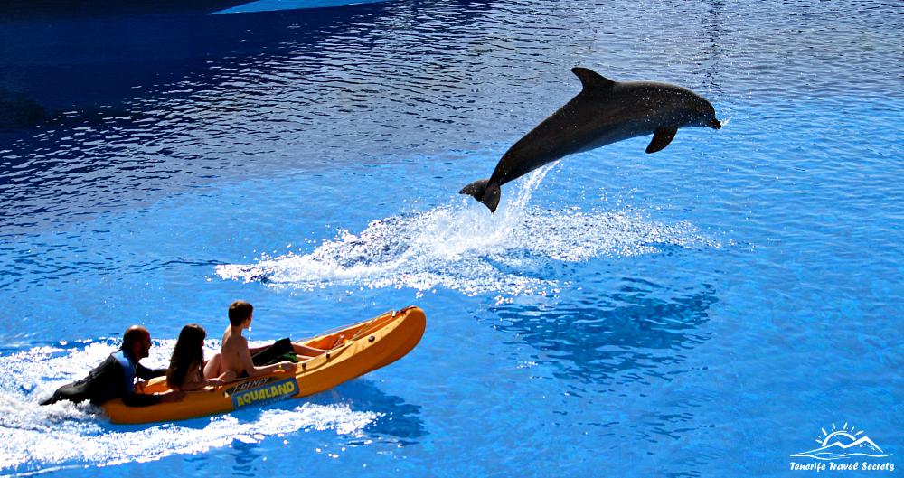 Aqualand_Delfines29