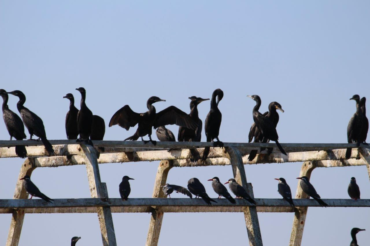 Birds everywhere on the wrecked boat