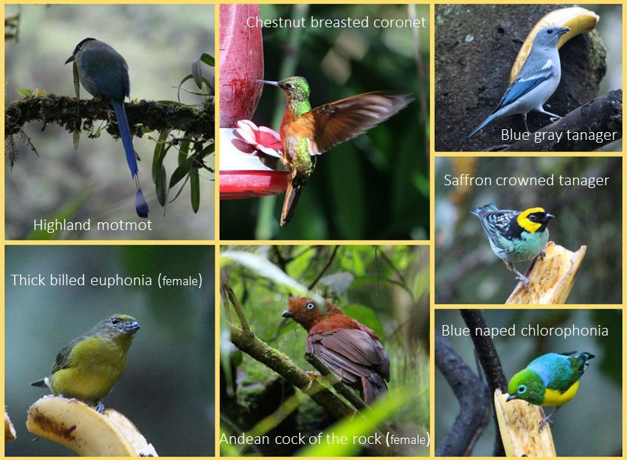 IMPPH-birds