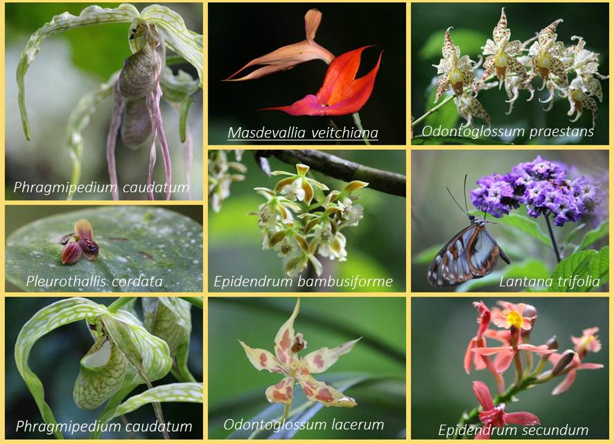 IMPPH-orchids