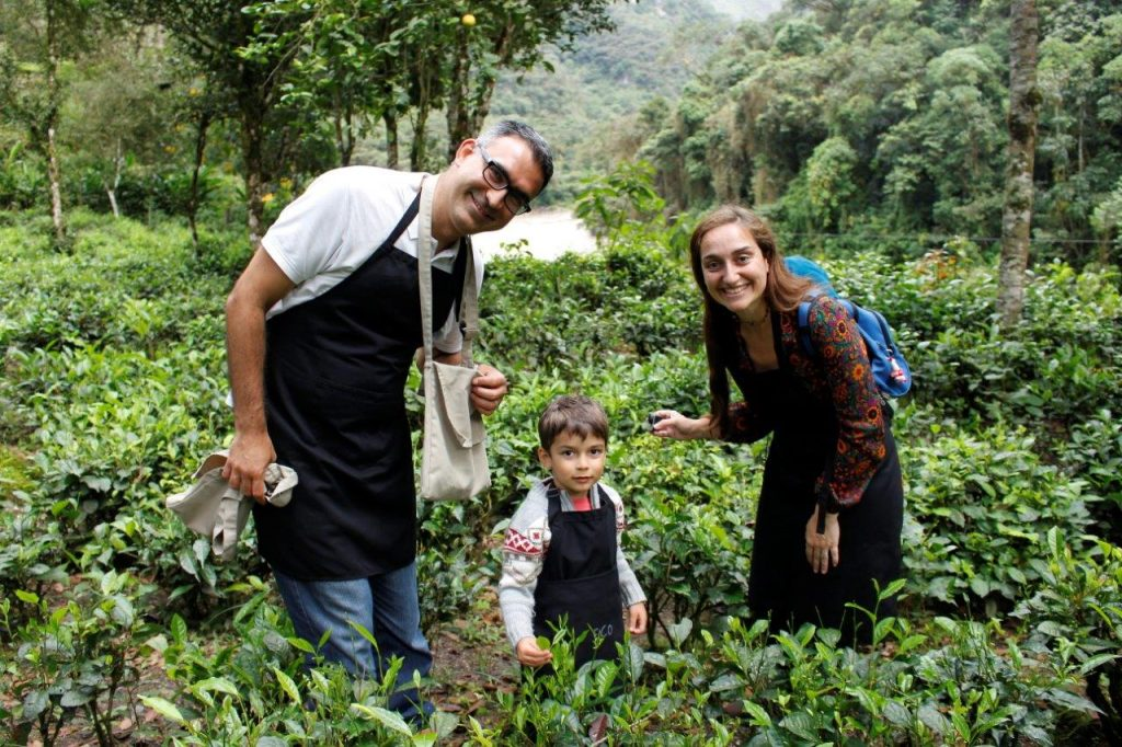 Inkaterra Machu Picchu Pueblo tea plantation
