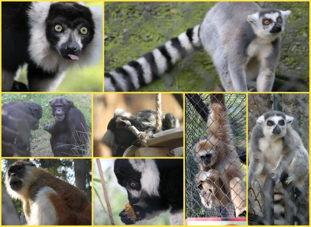 Monkey Collage (2)