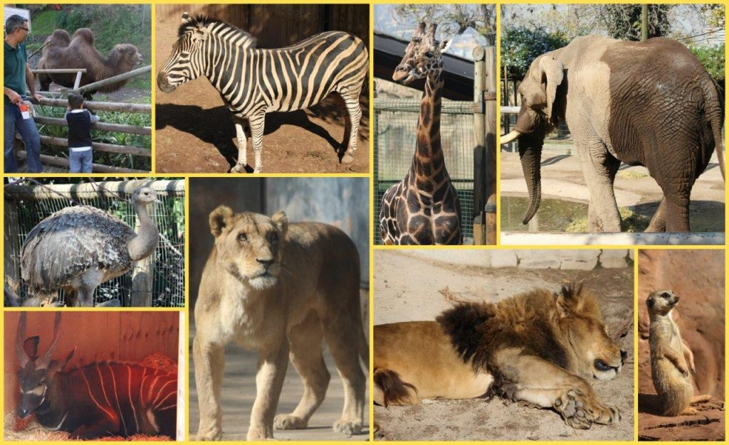 africaCollage (2)