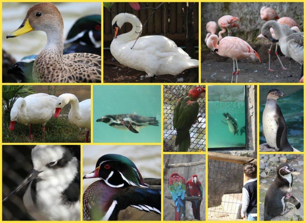 birdsCollage (2)