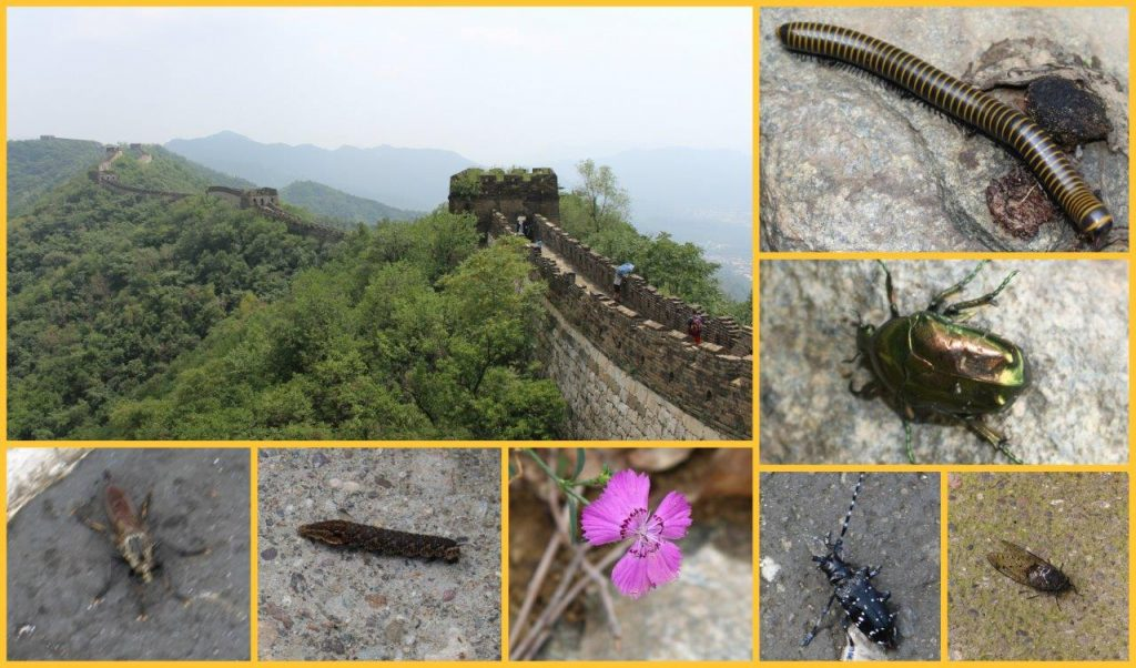 insectsgreatwallCollage