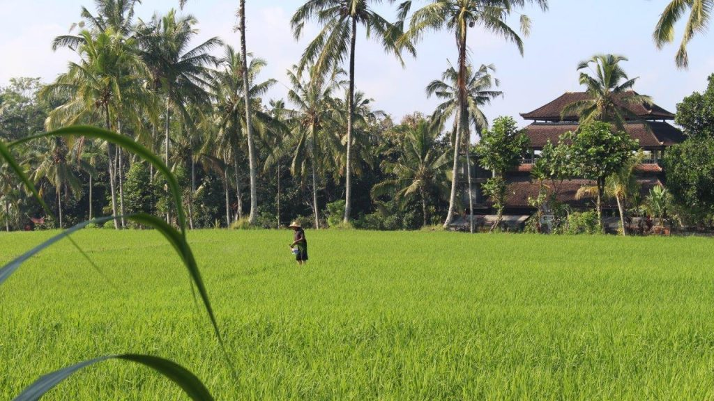 One of the several rice fields we visited in Bali