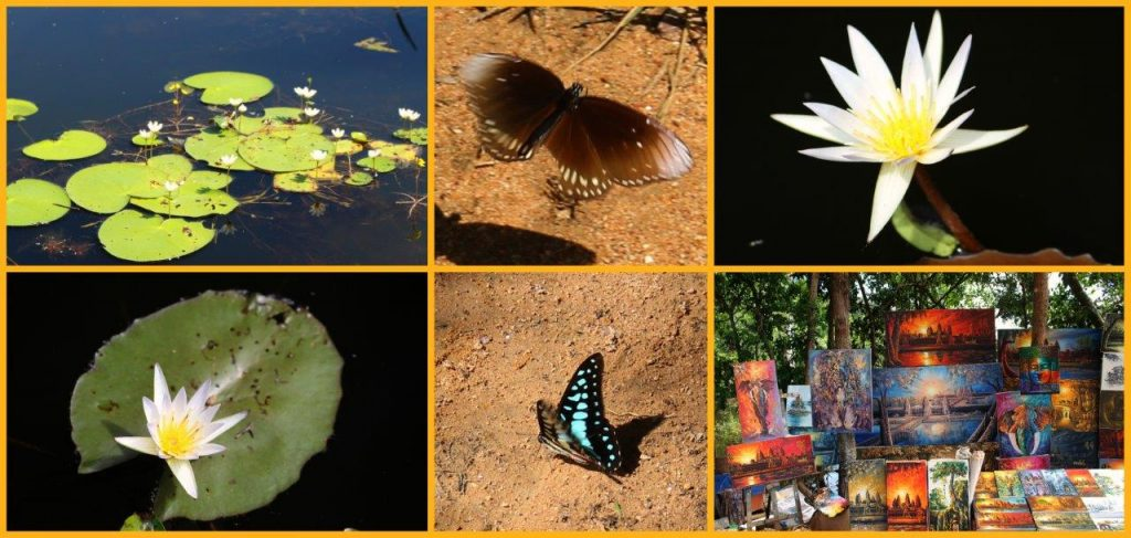 lakecollage
