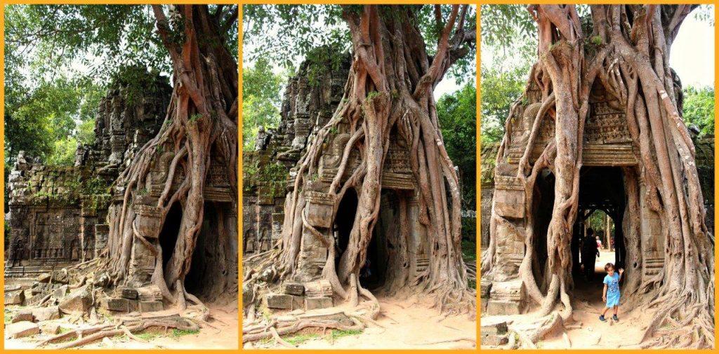 tree1collage