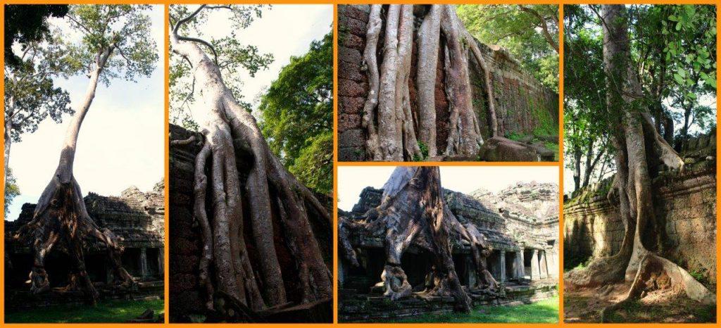treesimage